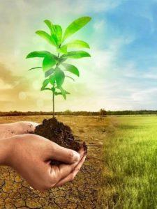SegurCaixa Adeslas y su compromiso con el medio ambiente
